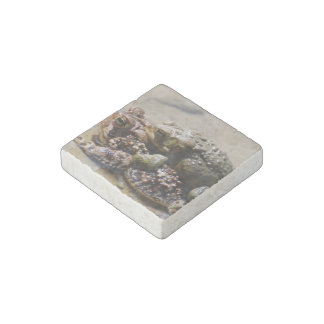 Frogs Stone Magnet