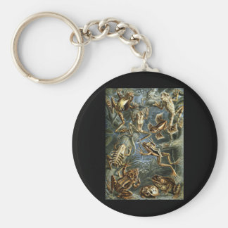Frogs & Toads Key Ring