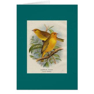 Frohawk - Saffron Finch Card
