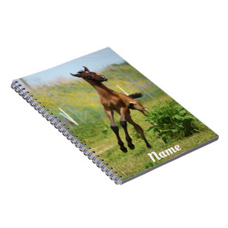 Frolicking Arabian Foal Notebooks
