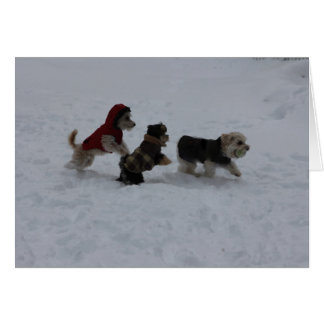 Frolicking Friends Holiday Greetings Card
