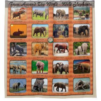 From Around The World - Wild Elephants Shower Curtain