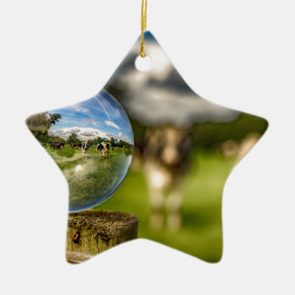 From Grass To Glass Ceramic Star Decoration