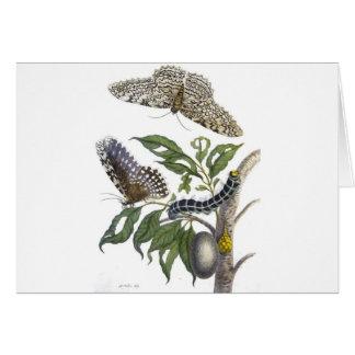 from Metamorphosis insectorum Surinamensium, Plate Card