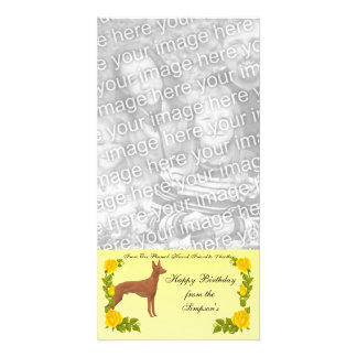 From One Pharaoh Hound Friend to Another Custom Photo Card