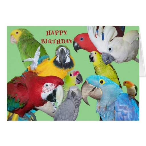 From the Flock Birthday Greeting Cards