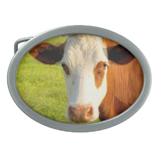Front view Friesian cow Oval Belt Buckle