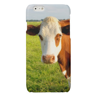Front view Friesian cow Glossy iPhone 6 Case