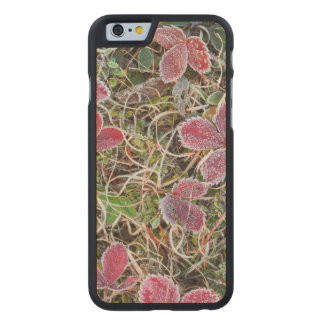 Frost covered leaves, Canada Carved Maple iPhone 6 Case