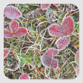 Frost covered leaves, Canada Square Sticker