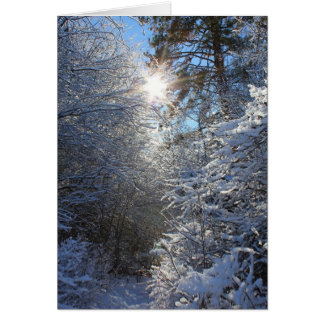 Frost Covered Trees Greeting Card
