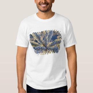 Frost on evergreen tree, Homer, Alaska T Shirt