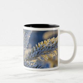 Frost on evergreen tree, Homer, Alaska Two-Tone Coffee Mug