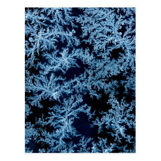 Frost patterns close-up, California Postcard