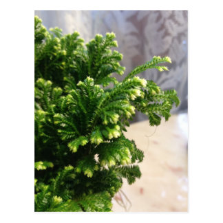 Frosted Fern Plant Postcard