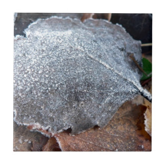 FROSTY AUTUMN LEAF SMALL SQUARE TILE