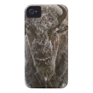 Frosty Bison iPhone 4 Covers