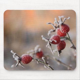 Frosty rose hips in sunlight mouse pad