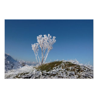 frosty snow covered ditch with weeds poster