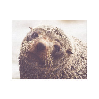 Frosty Whiskered Seal Canvas Print