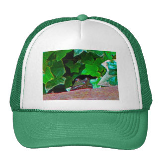 Frowning Frog Cap