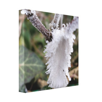 frozen feather canvas print