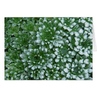 Frozen Greens Card
