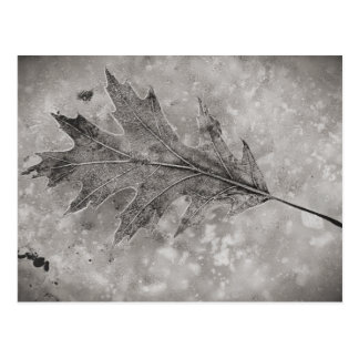 Frozen Leaf Postcard