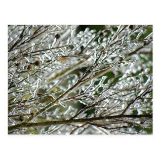 Frozen Myrtle Branches Postcard