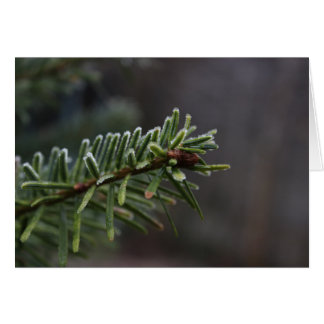 Frozen Pine Tree Card