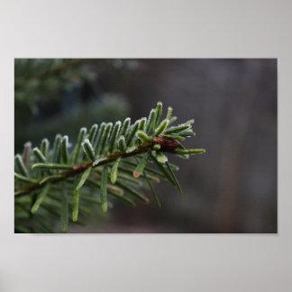 Frozen Pine Tree Poster