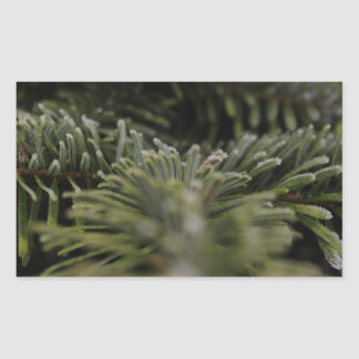 Frozen Pine Tree Rectangular Sticker