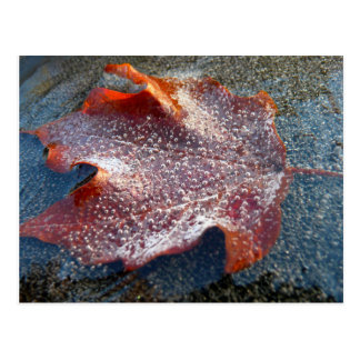 Frozen Red Maple Leaf Late Autumn Nature Postcard