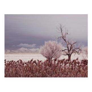 Frozen View of Antelope Island - Utah - Postcard