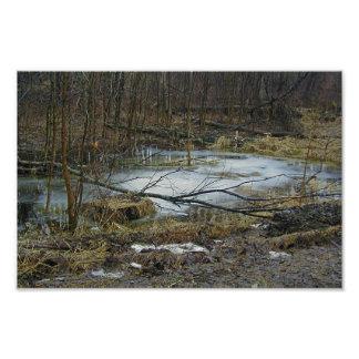 Frozen Water Camo Woods Kodak Professional Prints Photo