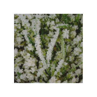 Frozen Winter Grass Wood Canvases
