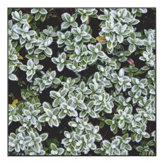 Frozen Winter Plants