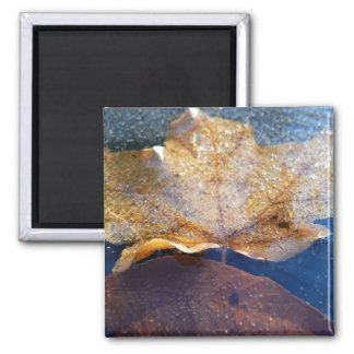 Frozen Yellow Maple Leaf Autumn Nature Magnet