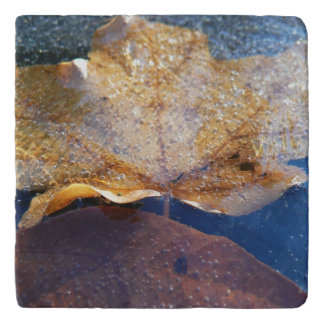 Frozen Yellow Maple Leaf Autumn Nature Trivet