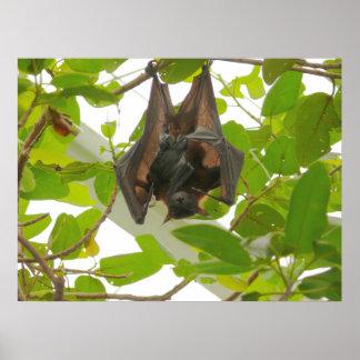 Fruit Bat Posters