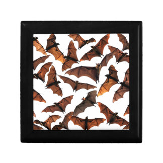 Fruit bats flying fox colony in sky gift box