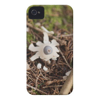Fruit body of a rayed earthstar (Geastrum quadrifi iPhone 4 Case