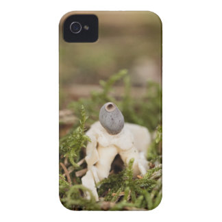 Fruit body of a rayed earthstar (Geastrum quadrifi iPhone 4 Cover