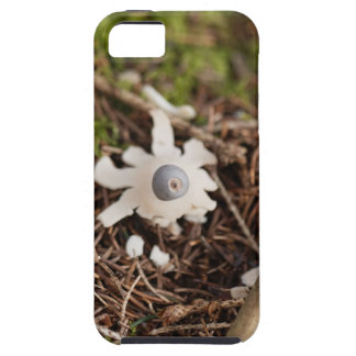Fruit body of a rayed earthstar (Geastrum quadrifi iPhone 5 Cover
