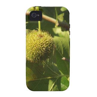 Fruit iPhone 4/4S Cases