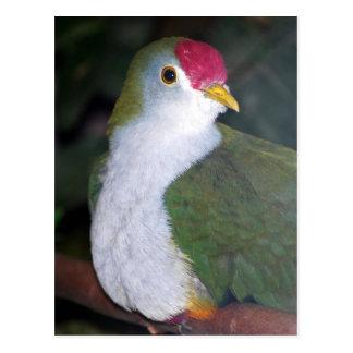 fruit dove postcard