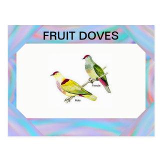 Fruit Doves Postcard