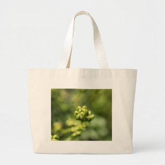 Fruit of a common rue (Ruta graveolens) Large Tote Bag