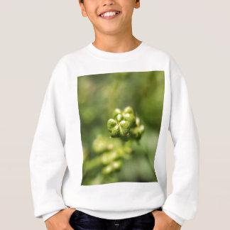 Fruit of a common rue (Ruta graveolens) Sweatshirt