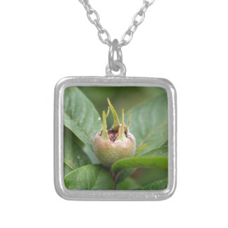 Fruit of the common medlar silver plated necklace